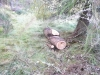 Cleared timber 2